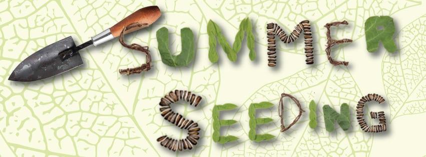 Summer Seeding