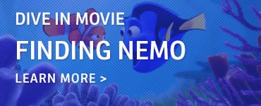 Dive In Movie Callout – Nemo