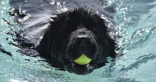 Doggie Dip at The J!